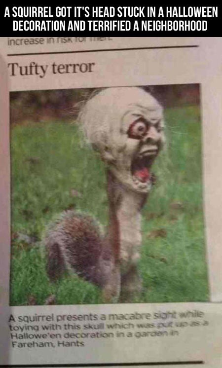 fuzzy terror halloween halloween funny halloween news halloween picture lol halloween prank halloween squirrel lol scary xs