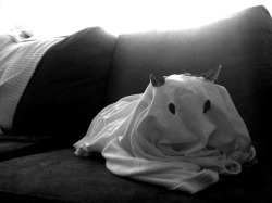 Happy Halloween, love ghost-cat
