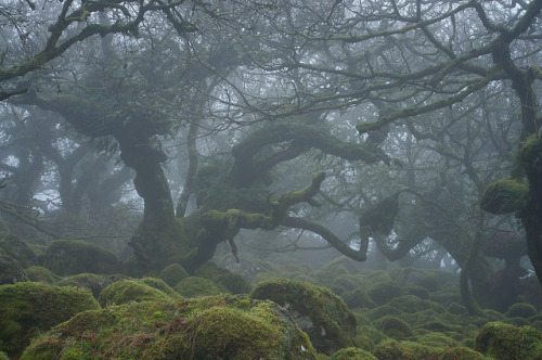visitheworld:  Haunted forests of Dartmoor National Park in Devon, England (by Duncan George).