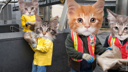 jezebelcom:  Much-needed disaster relief from the feline community.  (Image by our own Jim Cooke, who is awesome.)