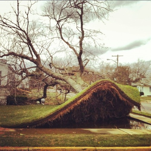 More storm damage: Entire tree ripped from the ground during #Sandy