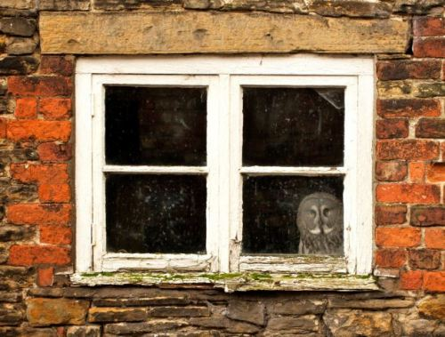 'You don't normally expect to see an owl in a house. He looked quite ghostly.'