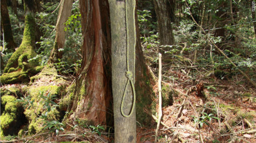 Place No. 68 Aokigahara Forest, Japan AKA The Suicide Forest
