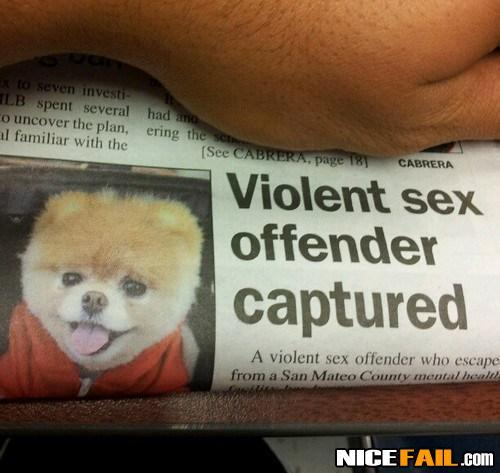 Violent Puppy Headline Fail