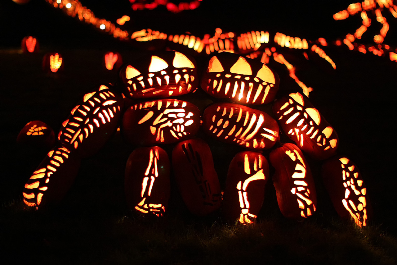 Pumpkinosaurus A Stegosaur made out of carved pumpkins, at the Great Jack O'Lantern Blaze in Croton-on-Hudson, NY.