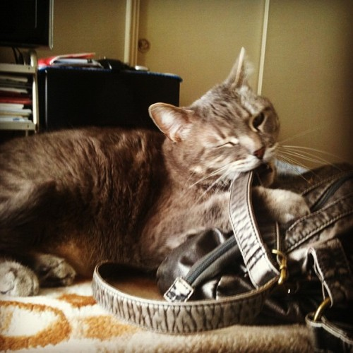 "Cat Busted With 12,000 Fake Prada Bags The U.S. Federal Bureau of Investigation and the Department of Commerce announced the arrest this morning of Mitzy, a cat living in Philadelphia, PA who was allegedly sitting on the top of a multi-state, billion dollar counterfeiting operation. The cat was arrested with over 12,000 fake Prada bags in her possession.  The bags have a street value of over $3.5 million. ""Once we got Sammy the Salamander — a street hustler we picked up in Queens, NY last year — to flip on Mitzy, it was just a matter of putting together the resources for a sting,"" said FBI spokesperson Wil Quantos.  If convicted, Mitzy faces up to 20 years in prison. Via ingrid_a_t."