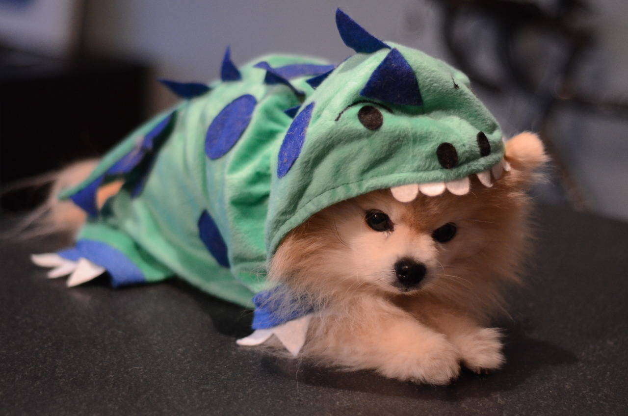 Never too old for Halloween. Your dino-pal, TommyPom