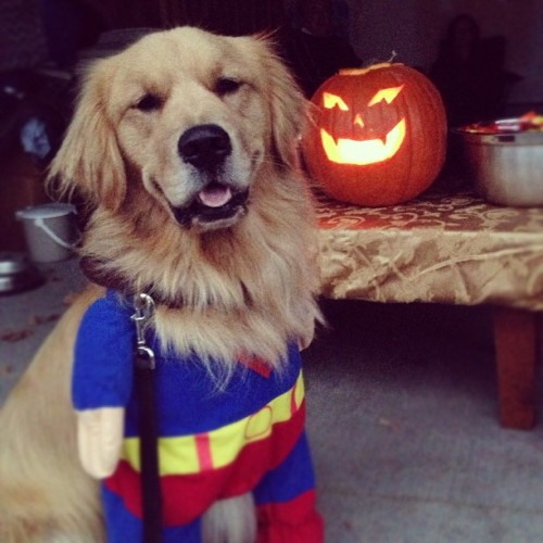 Happy Halloween from super man!!