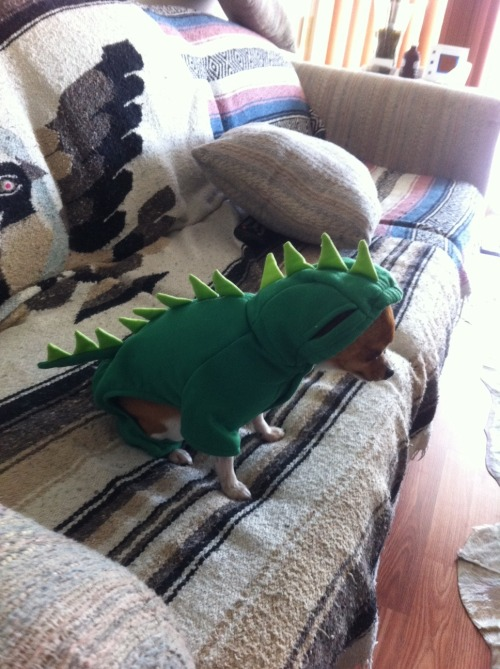 Miles here is so embarrassed to be dressed as a dinosaur, he won't look at his owner. Which is fair. With a costume that fantastic, why is he at home, on the couch, and not starring in some parade somewhere to show off how amazingly adorable he is?!?! I get you, Miles. (Thanks for the photo, Emily H!)
