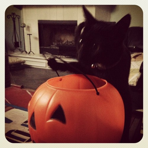 Viola the Hopeful Trick or Treater.