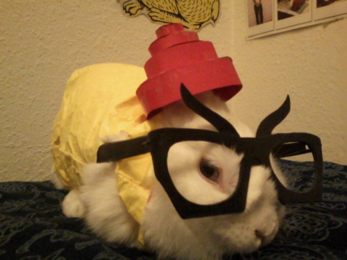 snoochie-boochiess:  pussybow:  bunnypoison:   Penny is a Spud for Halloween.    schatzi would make an excellent spud.  why dont i have a bunny i can dress up   omg
