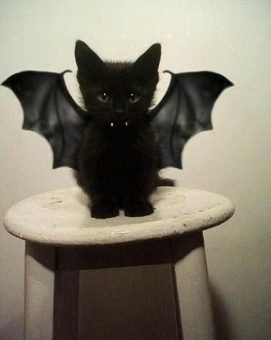 asdfghjkl kitten bat cutebomb!!