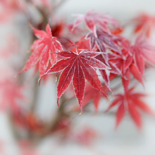 frost by hm-art on Flickr.