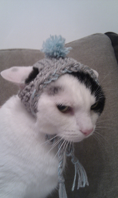 My beloved cat Freddie, last Christmas, wearing his winter bobble hat.