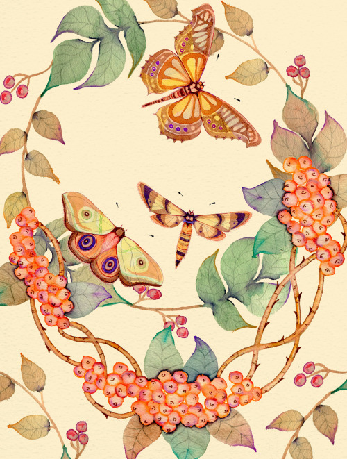 colleenparker:  Vintage Buttermoths