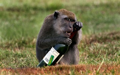 allcreatures:   A monkey clutches bottle of red wine just outside the University of Natural Sciences in Malaysia. Photographer and physics professor, Mihail Nazarov, originally from Moldova, said: I assume this monkey must have stumbled across the bottle and happened to like the smell of it. He tried for a while to open it and was eventually clever enough to pop the cork.  Picture: MIHAIL NAZAROV / CATERS NEWS (via Pictures of the day: 1 November 2012 - Telegraph)  GPOY Weekend