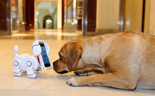 theanimalblog:  A puggle meets the new top toy for Christmas, Bandai's TechPet, at Harrods in London. Hailed as a modern day Tamagotchi, the TechPet is a new app based toy, which allows users to interact and play with their very own robotic dog.  Picture: Rex Features  For the person who has everything except a pet?