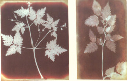 fernsandmoss:  William Henry Fox Talbot