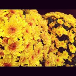 Yellow. #flowers #petals #yellow #nature #newyork #nyc #igers #igersnyc #bestoftheday #ink361 #instamood #igerslondon