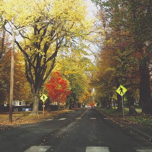 It's obviously November now! 🍁🍃🍂 #vscocam #instavscocam #november #fall #autumn #fallcolors #iphoneonly #iphonesia #iphoneography #cwu #ellensburg #trees  (at Shaw-Smyser)