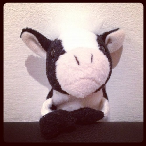 Something beginning with 'C' - Cow  #FMSphotoaday