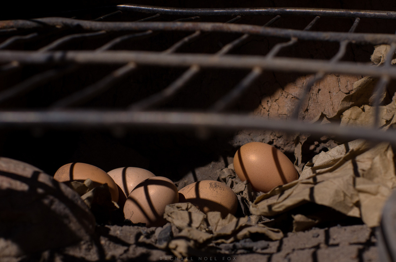wrong place.  roaming chickens laid eggs in the small chiminea. New Mexico. October 2nd, 2012 © Rachael Noel Fox