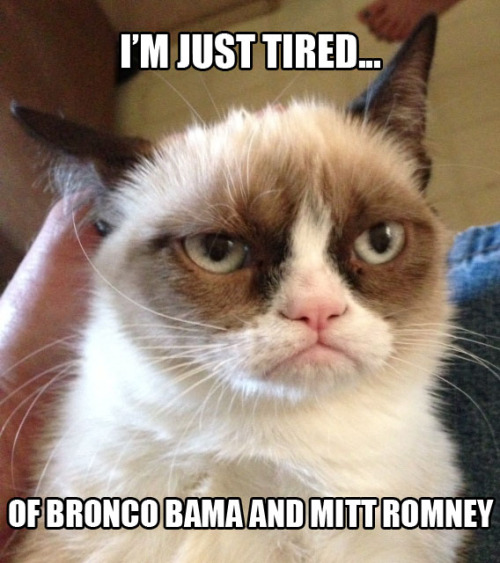 I nominate Grumpy Cat for president of the internet!