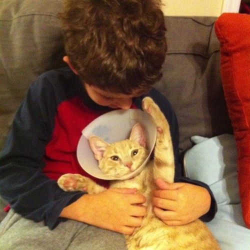 copycatr:  Freddy wears the cone of shame after being neutered.