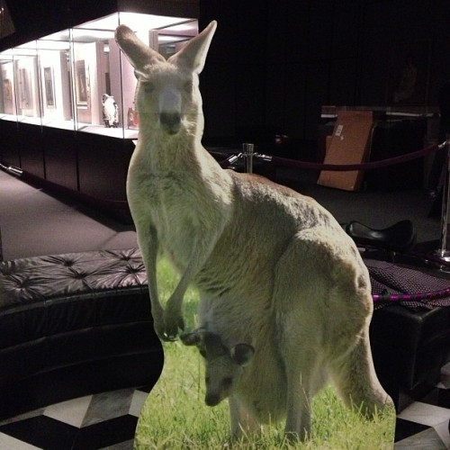 beastlie:  This cardboard cutout of a kangaroo isn't even the weirdest thing in Bobst right now. The whole campus has hurricane crazies. #nyu  Oh man, things are getting weird in Bobst.