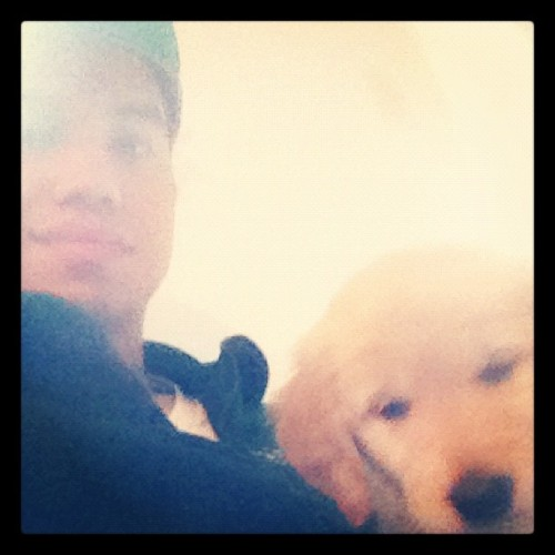 #puppy #golden #love