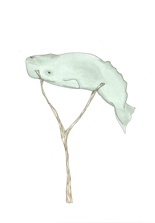 "July 12, 2012 (Baby Sperm Whale)15""x11""ink and watercolor on paper Buy Baby Sperm Whale on Etsy"