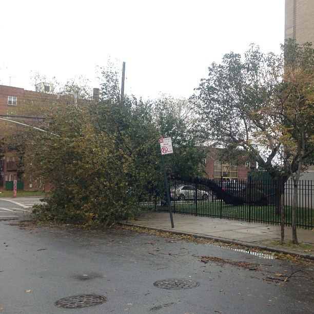 Tree down at PS209