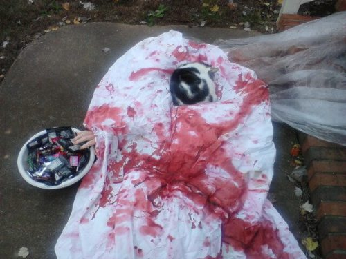 getoutoftherecat:  get off of there cat. you've ruined Halloween.