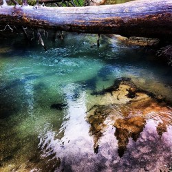 eddyizm:  Big Pine Creek #hiking #backpacking #california #easternsierras #hwy395 #eddyizm #iphone4 #bigpine big pine lakes #fuckyeahhiking #mountains #forest #johnmuir wilderness #glacier