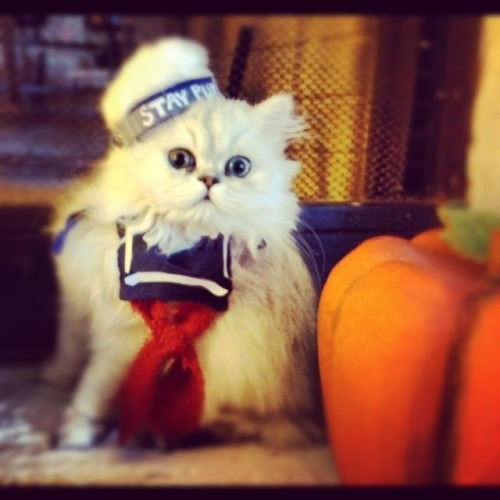 Marshmallow Kitty (via)