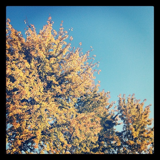 #morning #autumn #trees #leaves