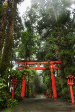 japanlove:  The Rainy Forest in Hakone by Stuck in Customs on Flickr.
