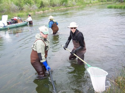 Monitoring fish populations by electro-fishing—sending volts of electricity that bring fish to the surface—at The Nature Conservancy's Silver Creek Preserve in Idaho. Silver Creek is a popular and famoud destination for anglers; it is also one of the most studied spring creeks in the world. Credit: Matt Miller/TNC
