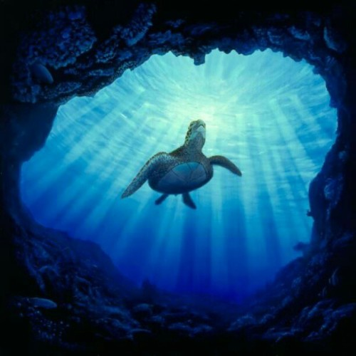 I love ALL types of TURTLES!!! Sea-land-whatever :)