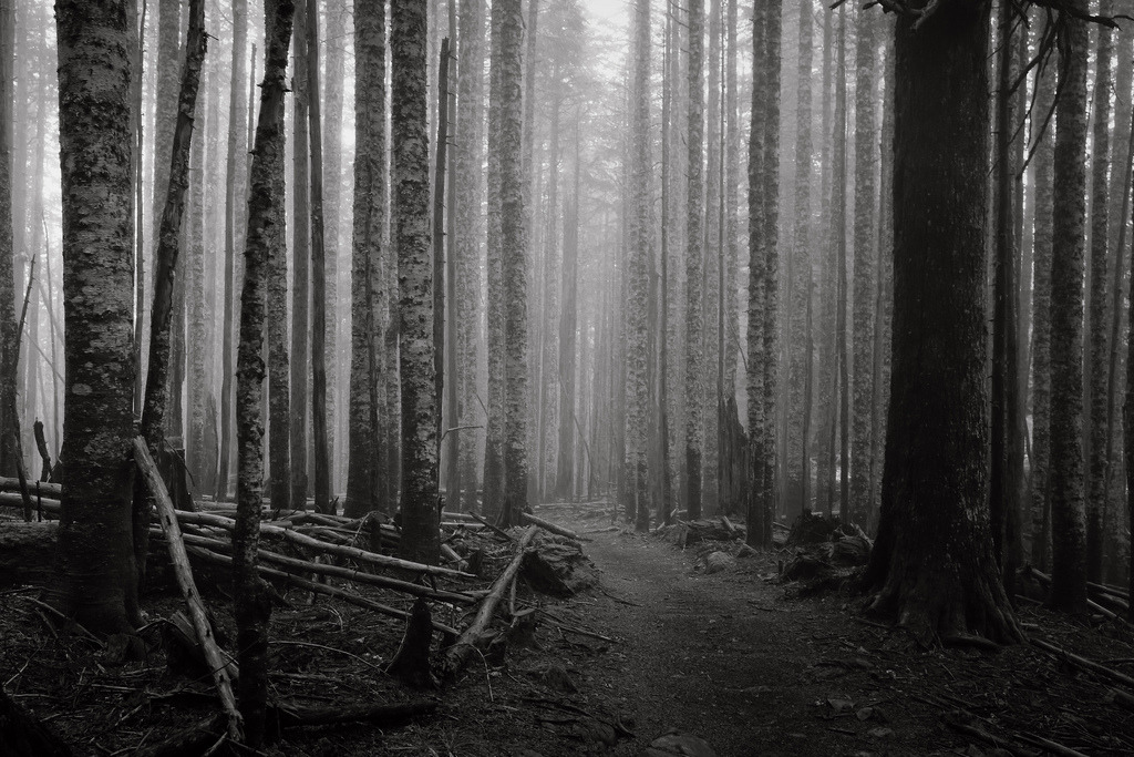 Sounds of a Dark Forest (by Scott Withers Photography)