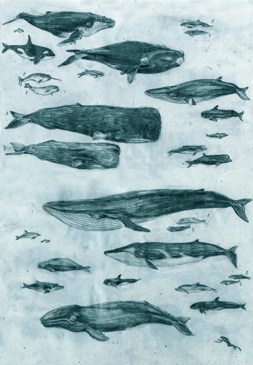 Beautiful art of dolphins and whales.