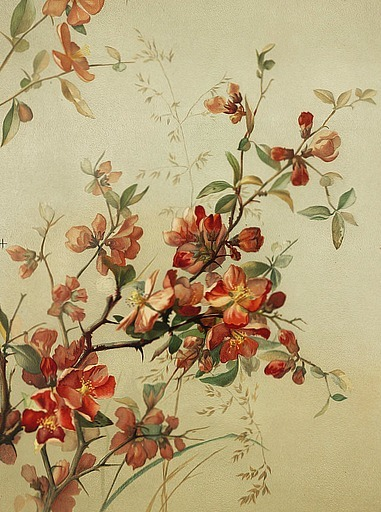 Study of Japan Quince, 19th century, Madeline Flory