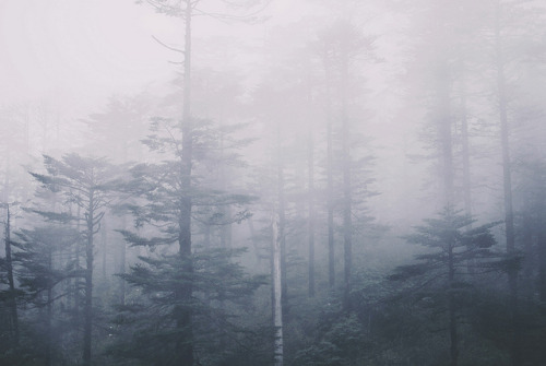 uncoverinq:  (by angela w*)   Quiet beauty