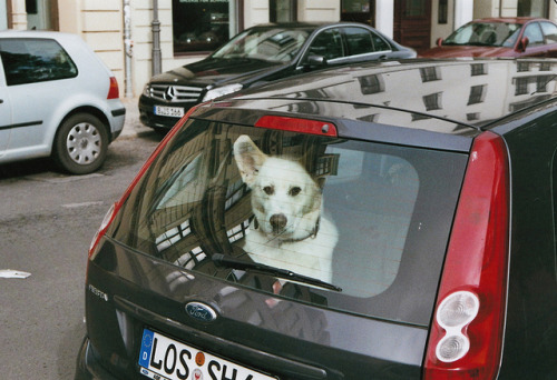 GASSI GEHEN by ah.te! on Flickr.Dog in back of car