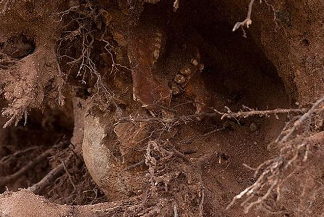 Look closely: you can see skeletal remains in the roots of this century-old tree felled by Sandy in New Haven, CT. This will be a plot point in an upcoming CSI episode, guaranteed. (Photo: Thomas Macmillan / New Haven Independent via the New York Daily News)