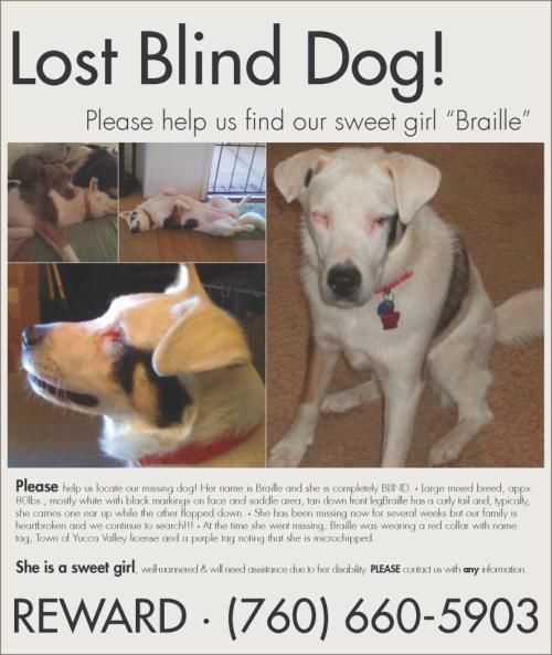 "bankston:  COACHELLA VALLEY, CA - MISSING BLIND DOG!! Prayers for Honey BEE  Coachella Valley Peeps! CALI!! please share!! thank you! (( debi )) {{{ BLIND AND LOST! }}} I KNOW there are a multitude of pet lovers on this site – so PLEASE help me get this posting VIRAL throughout the region. She has been lost for three weeks already! Let's get this pup back home to her family! I mean, come ON peeps, she is adorable – and her name is Braille!   ""Please help us locate our missing dog! Her name is Braille & she is completely BLIND. • Large mixed breed, appx. 80 lbs., mostly white with black markings on face & saddle area, tan down front leg. Braille has a curly tail & typically, she carries one ear up while the other flopped down. • She has been missing now for several weeks but our family is heartbroken & we continue to search!!! • At the time she went missing, Braille was wearing a red collar with name tag, Town of Yucca Valley license & a purple tag noting that she is microchipped.  She is a sweet girl, well mannered & will need assistance due to her disability. PLEASE contact us with any information (760) 660-5903."""