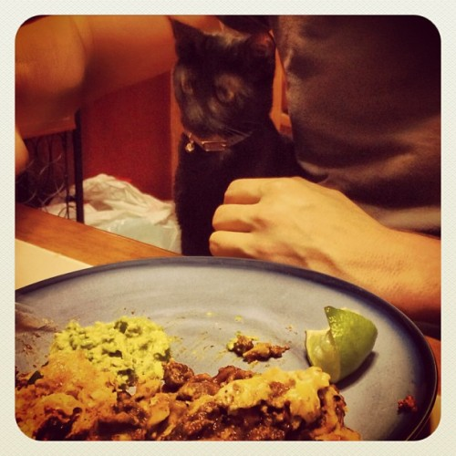 Table manners. #instacat #instapet #cat #kitten  #blackcat #pet #dinner #manners