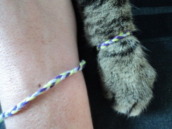 charlalar:  anclrew:  one time i made friendship bracelets for my cat and i