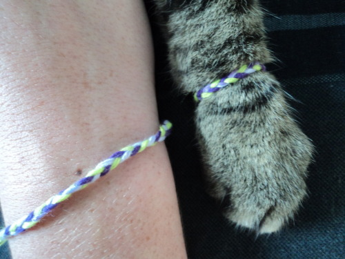 starryeyedmouse:  charlalar:  anclrew:  one time i made friendship bracelets for my cat and i   I am going to do this.
