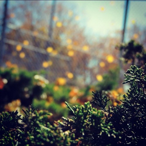 #colorful #fall #autumn #green #orange #blue #leaf #leaves #fence #bush #bushes #outdoors #outside #photo #photography #tree #trees #nature